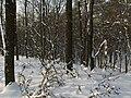 Украина, Киев - Голосеевский лес 18.jpg