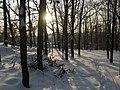 Украина, Киев - Голосеевский лес 19.jpg