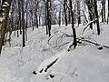 Украина, Киев - Голосеевский лес 86.jpg