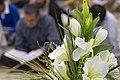 عکس های مراسم ترتیل خوانی یا جزء خوانی یا قرائت قرآن در ایام ماه رمضان در حرم فاطمه معصومه در شهر قم 41.jpg