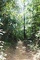 লাউয়াছড়া জাতীয় উদ্যান 07.jpg