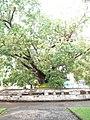 วัดเบญจมบพิตรดุสิตวนาราม Wat Benjamabophit Dusitwanaram (15).jpg