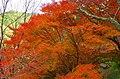 七曲りの紅葉 吉野山にて 2014.11.19 - panoramio.jpg