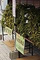 丹波黒枝豆 (37490112400).jpg