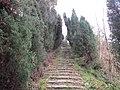 吹台山上的路 - panoramio.jpg