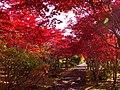 平岡樹芸センター(Hiraoka arboriculture center) - panoramio (20).jpg