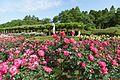 神代植物公園 ばら園 - panoramio (1).jpg