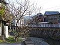 秋野川沿いのロウバイの花 Wintersweet blossoms 2013.2.09 - panoramio.jpg