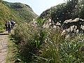 草嶺古道 Caoling Historic Trail - panoramio (2).jpg