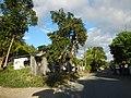 0160 jfFarms Pulo Roads Talacsan San Rafael Bulacanfvf 04.JPG
