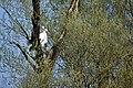04 0444 Tongrubengelände Bensheim-Heppenheim.jpg