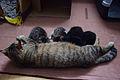 1-month-old kittens 05.jpg