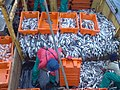 14022011018 aboard trawler African Queen.jpg