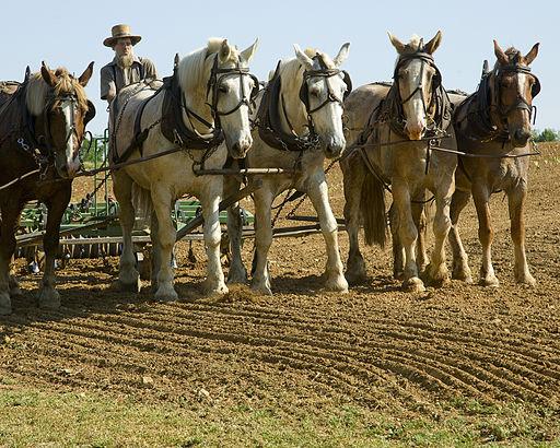 20100520-043 Amish farmer