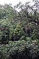 2012-10-22 17-02-49 Pentax JH (49277965053).jpg