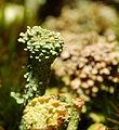 2012-11-18 16-23-45-lichen.jpg