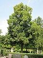 20120821Linde Friedhof Hockenheim1.jpg