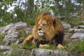 20140812 Lion IMG 0802.png
