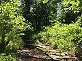 2015-06-12 15 08 39 View west along the Cain Branch of the Cub Run in Chantilly, Virginia.jpg