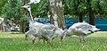 2017-07-04 13-46-48 oiseaux.jpg