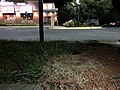 2018-06-15 22 40 39 An abandoned Canadian Goose nest in the parking lot of the Applebee's in Fair Lakes, Fairfax County, Virginia.jpg