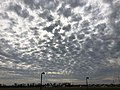2019-11-07 13 19 53 Altocumulus clouds viewed from Old Ox Road in the Dulles section of Sterling, Loudoun County, Virginia.jpg