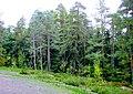 228. Vyborg. Park Monrepo.jpg