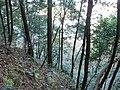 2 Chome Tsukimichō, Tajimi-shi, Gifu-ken 507-0043, Japan - panoramio (3).jpg