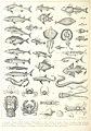 324 of 'Histoire illustrée de la Corse, contenant environ trois cents dessins représentant divers sujets de géographie et d'histoire naturelle, les costumes anciens et modernes, etc' (11064512783).jpg
