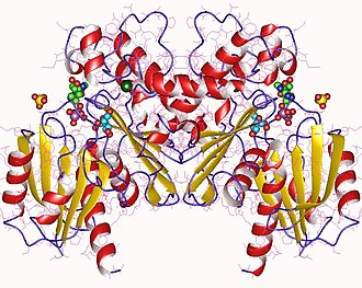 Fructokinase - Fructokinase dimer, Bacillus subtilis