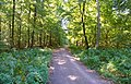 50 Schattierungen von Grün - panoramio.jpg