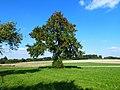 53 Baum.jpg