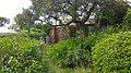 83230 Bormes-les-Mimosas, France - panoramio (29).jpg