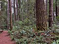 8 Forest in Jug Handle State Natural Reserve.jpg