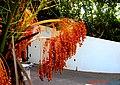 A@a palm Trees Deftera village nicosia cy. - panoramio (1).jpg