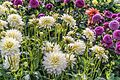 ADD SOME COLOUR TO YOUR LIFE (FLOWERS IN A PUBLIC PARK)-120136 (29273129775).jpg
