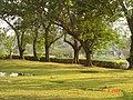 AIT - panoramio - Seksan Phonsuwan (70).jpg