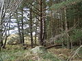 A boulder in the forest - geograph.org.uk - 602580.jpg
