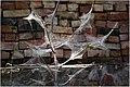 A cobweb - panoramio.jpg