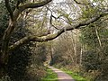 A footpath, Southampton Common - geograph.org.uk - 470121.jpg