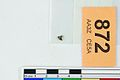 A fragment of silver pressblech foil from a helmet (FindID 555849).jpg