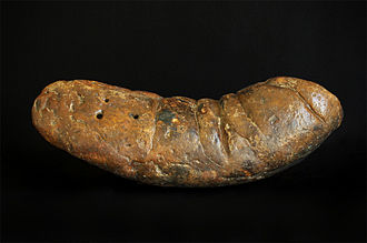 Coprolite - A large coprolite (fossilized feces) from South Carolina, USA.