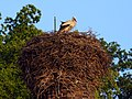 A stork on the chimney - panoramio.jpg