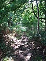A sunken path - geograph.org.uk - 989893.jpg