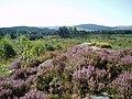 A view across Bennan Moss - geograph.org.uk - 532814.jpg