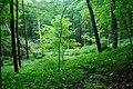 Abraham's Woods 2.jpg