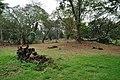 Acharya Jagadish Chandra Bose Indian Botanic Garden - Howrah 2011-02-20 1655.JPG
