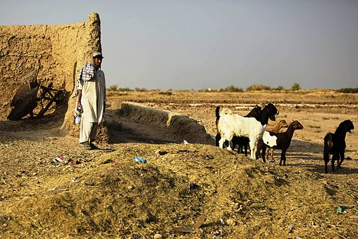 Afghan goatherd, Helmand Province