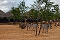 Africa en Valencia III - Bioparc (2787133801).jpg