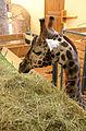 African Savannah house, Zoo Jihlava, stable 5.jpg